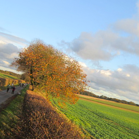 Picture of the Yorkshire Wolds